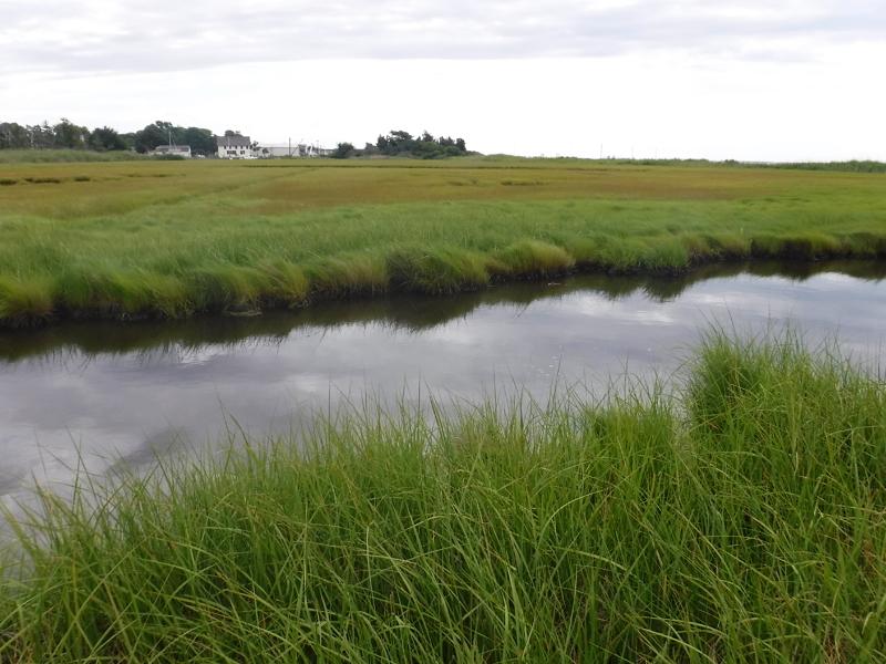 SCDPW Wetlands_16154_P2-east