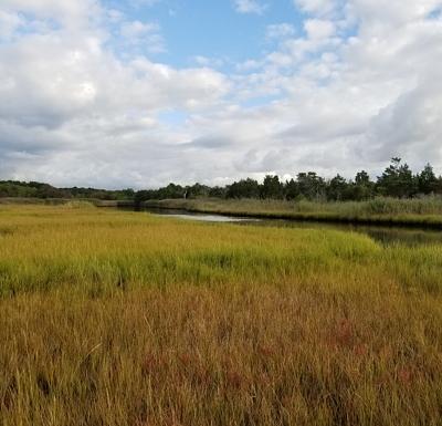 SCDPW Wetlands_16154_PS 3 N